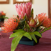 Protea at Kalaekilohana Inn & Retreat