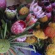 proteas flowers at Kalaekilohana Inn & Retreat